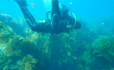 Photo of Gear Rentals diving course.